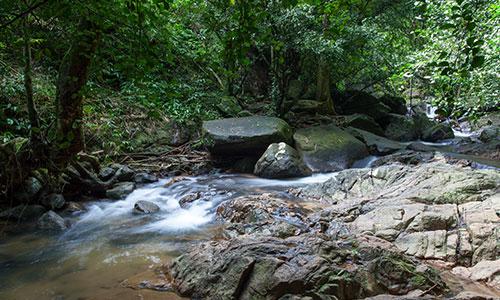 普吉迷人海灘之外 – 歡迎熱帶叢林探險