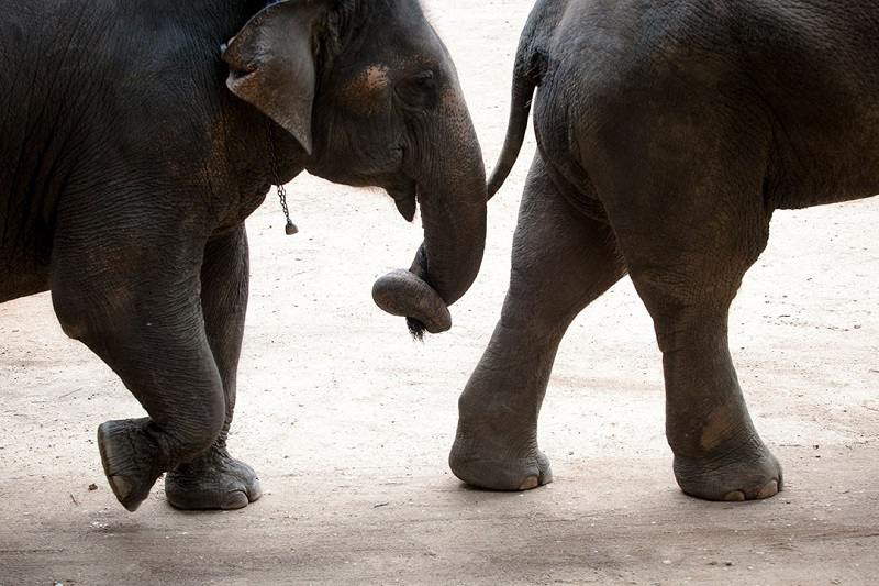 泰國野生動物保育和照顧關心之努力獲得成效