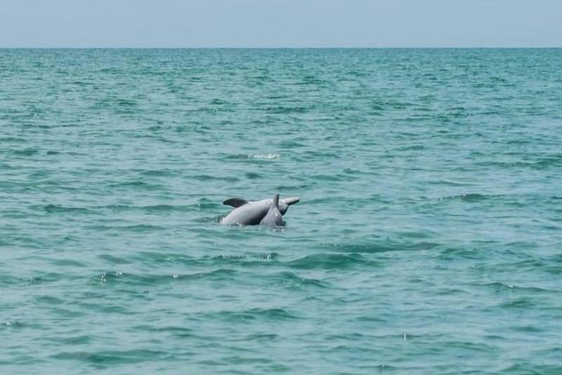 在噹府海域發現儒艮、海豚、海龜的蹤跡