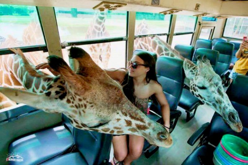 賽福瑞動物園照護員體驗活動